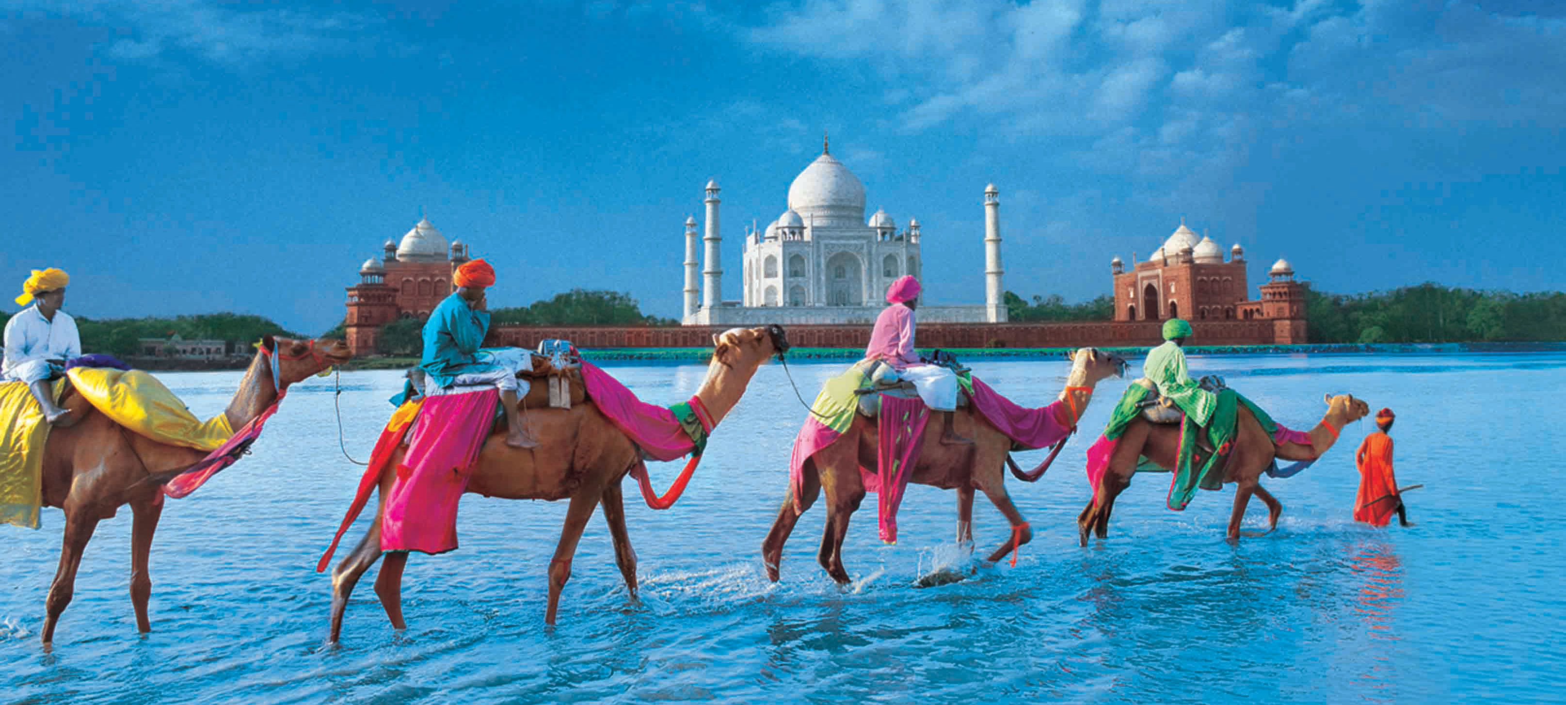Colourful Camels in front of the Taj Mahal in India